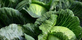 Gemüseanbau / Pixabay