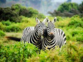 Afrika / Pixabay